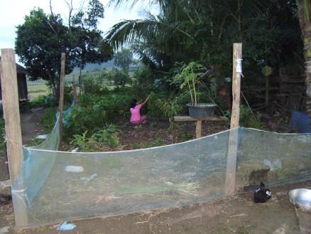 ソカーは家の脇にある畑で,野菜を摘んでいます。産地直送のとれたて野菜です。
