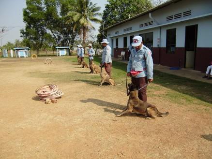 地雷犬の訓練の様子。